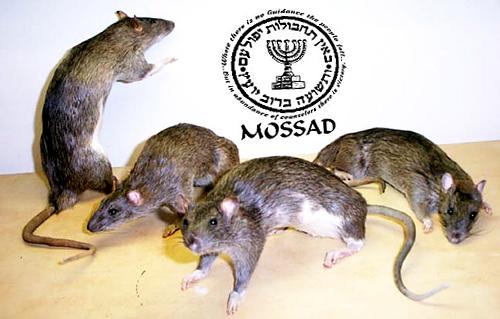 RATS-FIGHTING-5 - Copy (2)